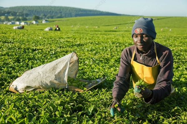Announcement of Tea Policy, Regulatory and Administrative Reforms amidst mixed Stakeholder reactions
